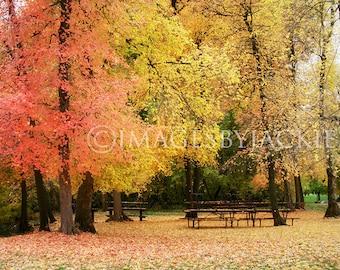 Autumn Park Fine Art Photography Digital Download