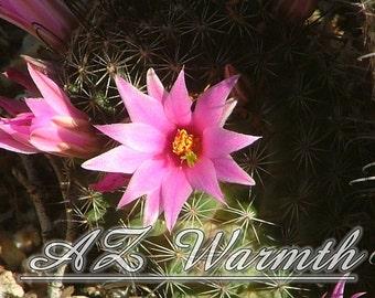 Desert Cactus Flower Photo Hot Pink Mammillaria Arizona Spring Nature Southwest Desert Flowers house warming wedding birthday gift ideas