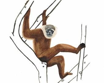 Original Gibbon Monkey Wildlife Illustration A4 watercolour painting