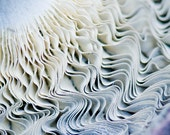 Mushroom Ruffles, Waves of Grace, Art in Nature, Fungi Macro Photograph, Montana Forest Mushroom, Photograph or Greeting card