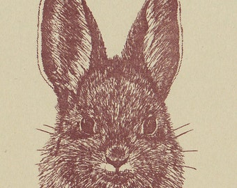 Cottontail Rabbit Card