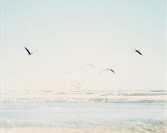 Pale blue beach photo, seagull photograph, soft tones, ocean photo, seaside, flying, summer, seashore, beach decor - In Faded Flight