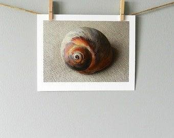 Seashell Print, 5x7 Beach Decor,Sea Shell Photography,Seashell Art,Coastal Decor Beach Shell Still Life Photography,Brown Nature Photography