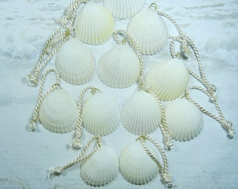 12 Cockle Shells for Wedding Favors Beach Decor - Seashell Holiday Ornaments