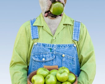 Apples, large original photograph of white boxer dog wearing overalls holding an apple in his mouth
