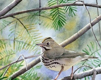 Ovenbird - Open edition print of an original watercolor (fits 11x14 frame)