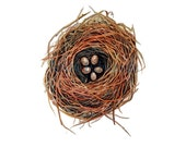 Nest watercolor with five speckled eggs - Original Watercolor