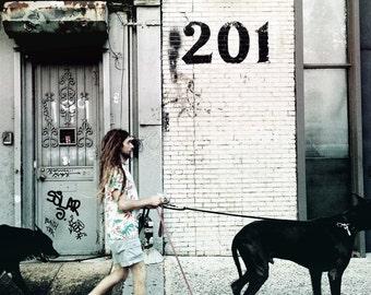 Man With Dogs Print, NYC Photography, Pearl Metalic Wall Art, Urban Home Decor. Large Print 13x13