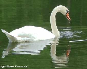 """5x7 Nature Inspired Single Photo Greeting Card or Print--Thank You--""""Adrift on the Lake""""--#39"""