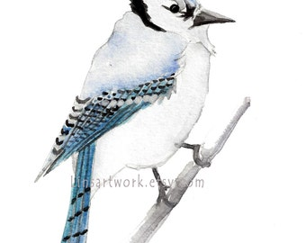 """Original watercolor painting or Limited Edition Print 5"""" x 7"""" - Bluejay.Birds. bird art."""