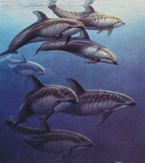 Pacific White Sided Dolphins, Small Print Signed & Dated 1990