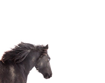 Horse photography, black horse running on white snow background, vertical horse photo print, horse photograph, horse wall art home decor