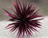Bordeaux Red Wine Spike Goose Biot Feather Firework Flower Mount - Millinery Supply, fascinator, church hat, boutonniere, hair bun accessory