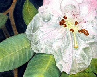 White rhododendron, painting of flower,s 8x10 original watercolor, floral painting, flowers earthspalette
