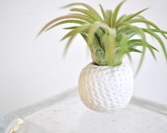 Ball Mini Planter White and Tillandsia Plant