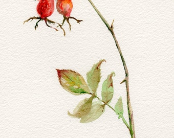 Rose hip watercolor painting, original botanical illustration, floral painting in red and green