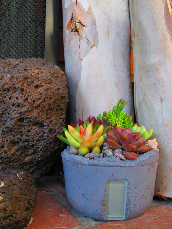 Beautiful Succulent garden in unique concrete planter