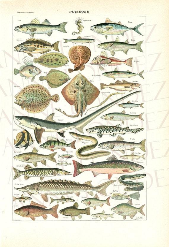 1948 Illustration de poissons vintage gravure ancienne page de
