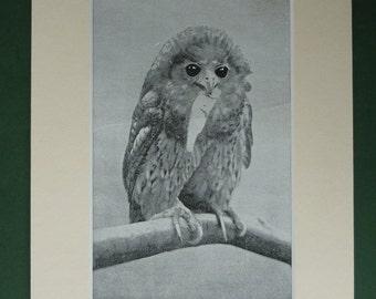 1920s Pel's Owl Print - Vintage Print - African Bird Print - Bird Of Prey - Nature Photograph - Natural History Print - Ornithology Print