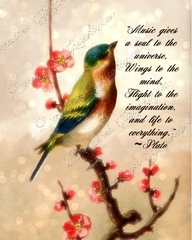 Plato Music Quote: A Motivational Bird Bokeh Fine Art