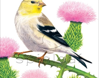Gold Finch Art Print -- Illustration of Female Yellow Finch Bird