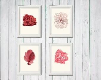 Coral coral red pink 4 art sea vintage printables digital file INSTANT DOWNLOAD