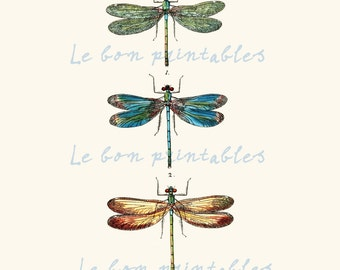 Vintage dragonfly instant download printable art jpeg 8,5 x 11 inch