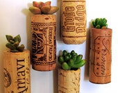 Set of 5 - Wine Cork Succulent Planters with your choice of mount - TheLovelySuccubent