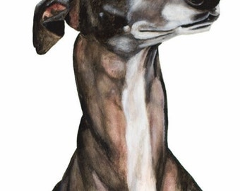 Greyhound Negra, Art print size 8x12 inch