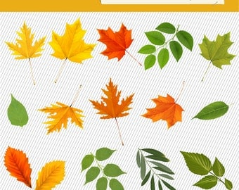Autumn Leaves Clipart. Fall Tree Leaves Illustration. Natural Digital Images. 100