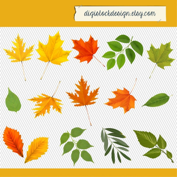 Herbst Blätter Clipart Herbst Baum Blätter