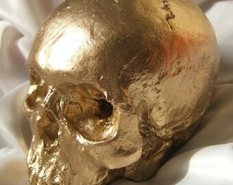 HUMAN SKULL REPLICA Gold Finish - full size human skull replica (plaster of Paris) painted gold