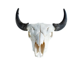 Real Bone Buffalo (Bison) Skull