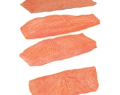 SALMON CUTS food illustration digital print 8x10