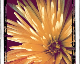 Nature Photography, Wall Decor, Home Decor Photography, Fine Art Print, Yellow Flwer,  'Flower in Full Bloom'