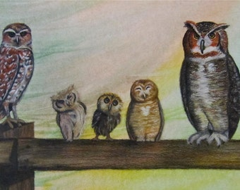 "A Parliament of Owls, matted and framed 14"" x 20"", watercolor background with charcoal drawing of owls"