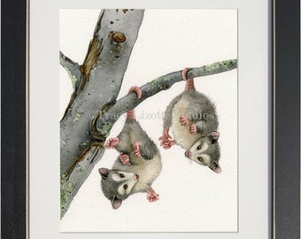 Playful Possums - archival watercolor print by Tracy Lizotte