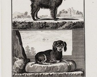 1766 Antique DOG print, Gorgeous engraving of a company dogs,  247 years old rare print