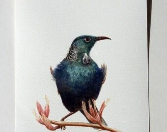 Tui - a native New Zealand bird giclee print