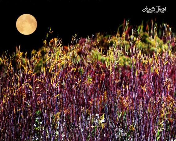 Harvest Moon Fall Foliage Moon Print Full Moon By Janelletweed