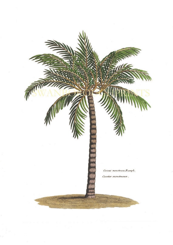 Critical image throughout palm tree printable