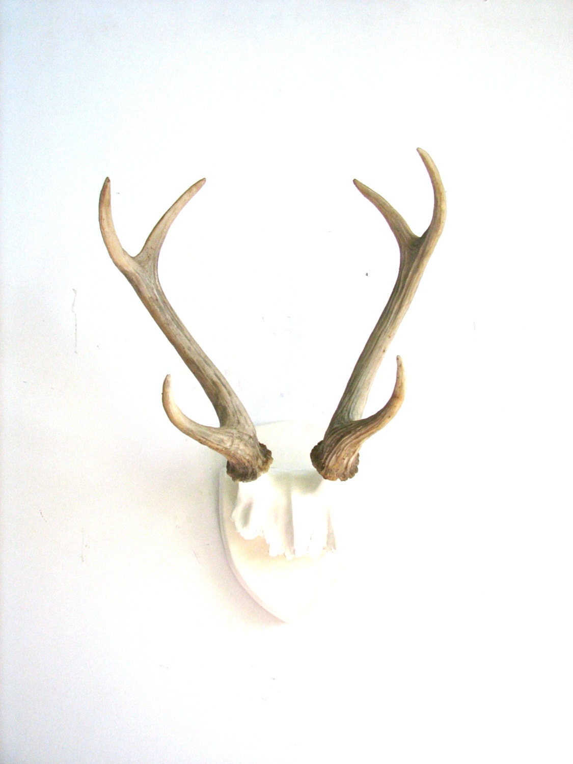 Faux antlers plaque wall hanging rustic modern wall mount wall for Antler decoration