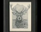 SALE** Stag - Framed Original Drawing