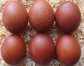 Naturally DARK hand blown real chicken eggs