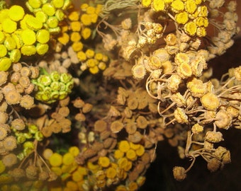 TANSY naturally DRiED FLOWER  Bunches