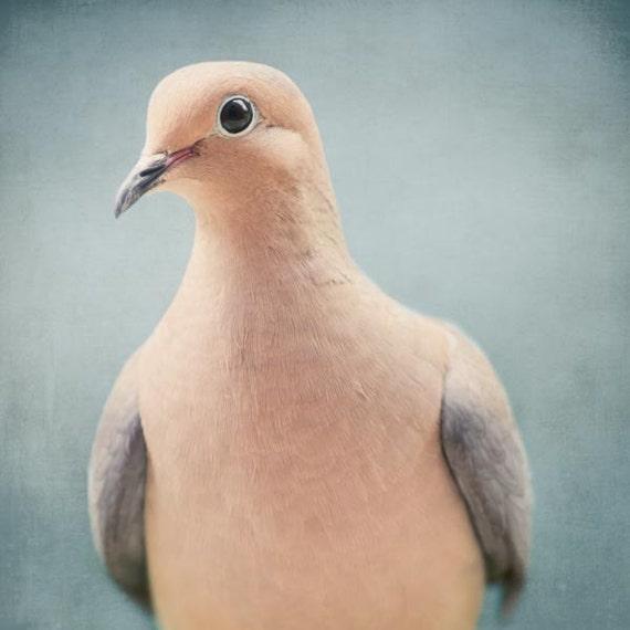 Mourning Dove Bird Art, Animal Photography, Nature Photography, Wall Art, Animal Art Print, Fine Art Photograph, Mourning Dove No. 5