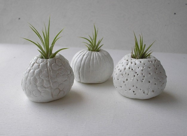 trois handsculpted blanc argile mini tillandsia air plantes. Black Bedroom Furniture Sets. Home Design Ideas