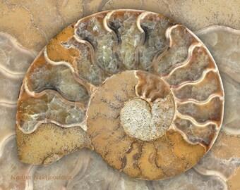 Fossil Ammonite B art print - 8x10 inches (20x25cm) - natural history decor, nature pattern, fibonacci spiral, golden ratio, nature art