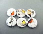 6 Bird Nature Fridge Magnets , Cute Magnet Set, Bird Magnets, Refrigerator Magnets, Nature Magnets Home Decor, gift for her 1227
