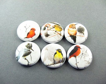 6 Bird Nature Fridge Magnets , Cute Magnet Set, Bird Magnets, Refrigerator Magnets, Nature Magnets Home Decor, gift for her 1227